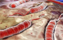 Bacteria-lera-1859841