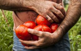 2014-01-La-Plata-Tomate-Platense-Ph-Felix-Busso-178-620x413